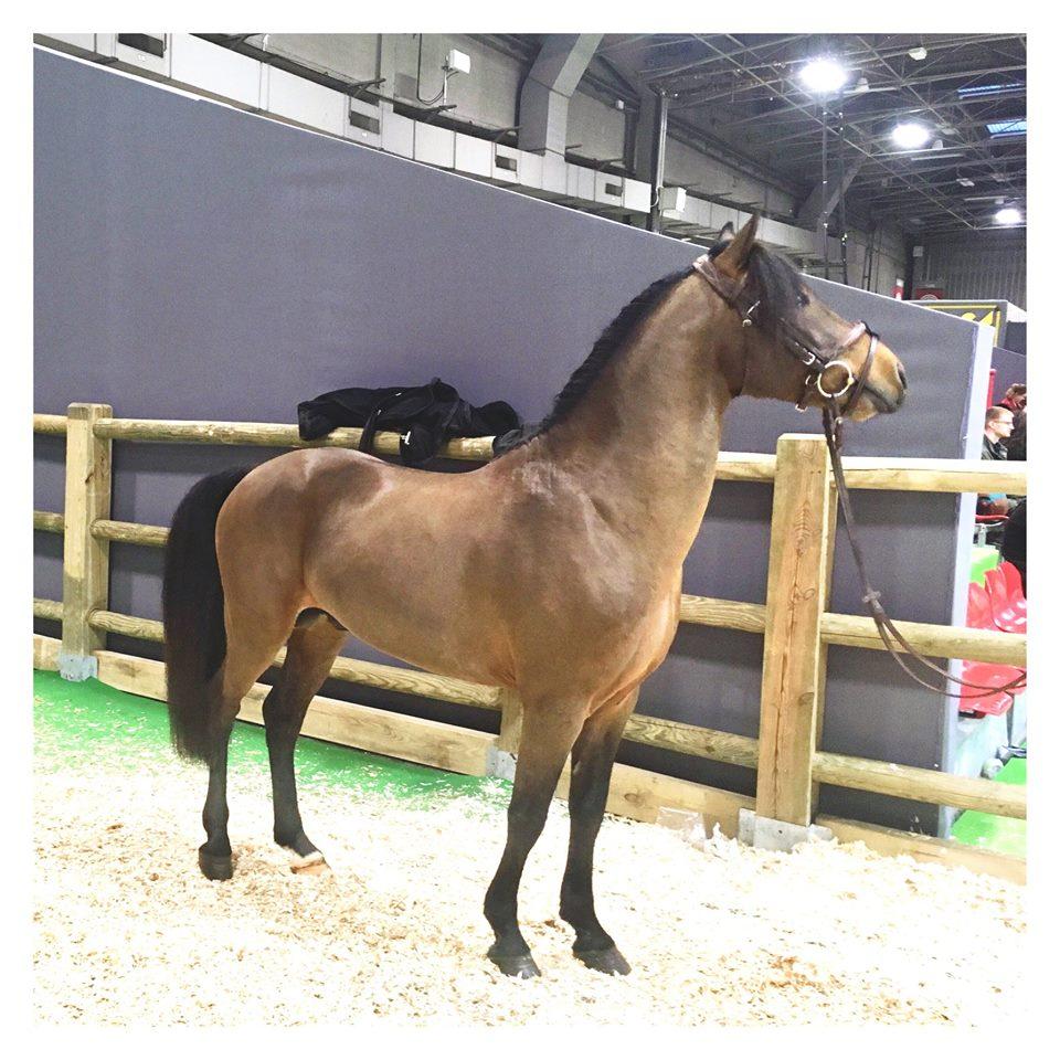 Equitaine 2019