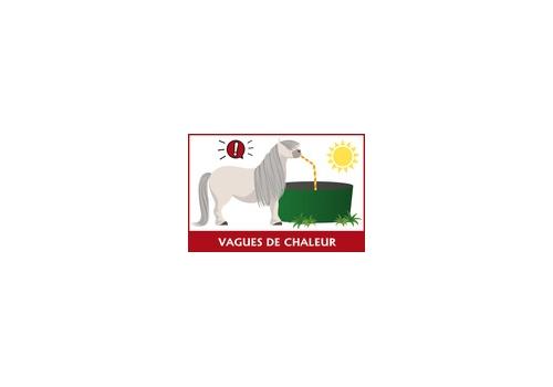 Restriction du transport des chevaux pendant la canicule