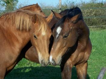 """Formation """"Améliorer sa relation avec son cheval pour limiter les risques"""""""