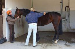 Garantir le bien-être et la santé de l'homme et du cheval pour travailler mieux et plus longtemps