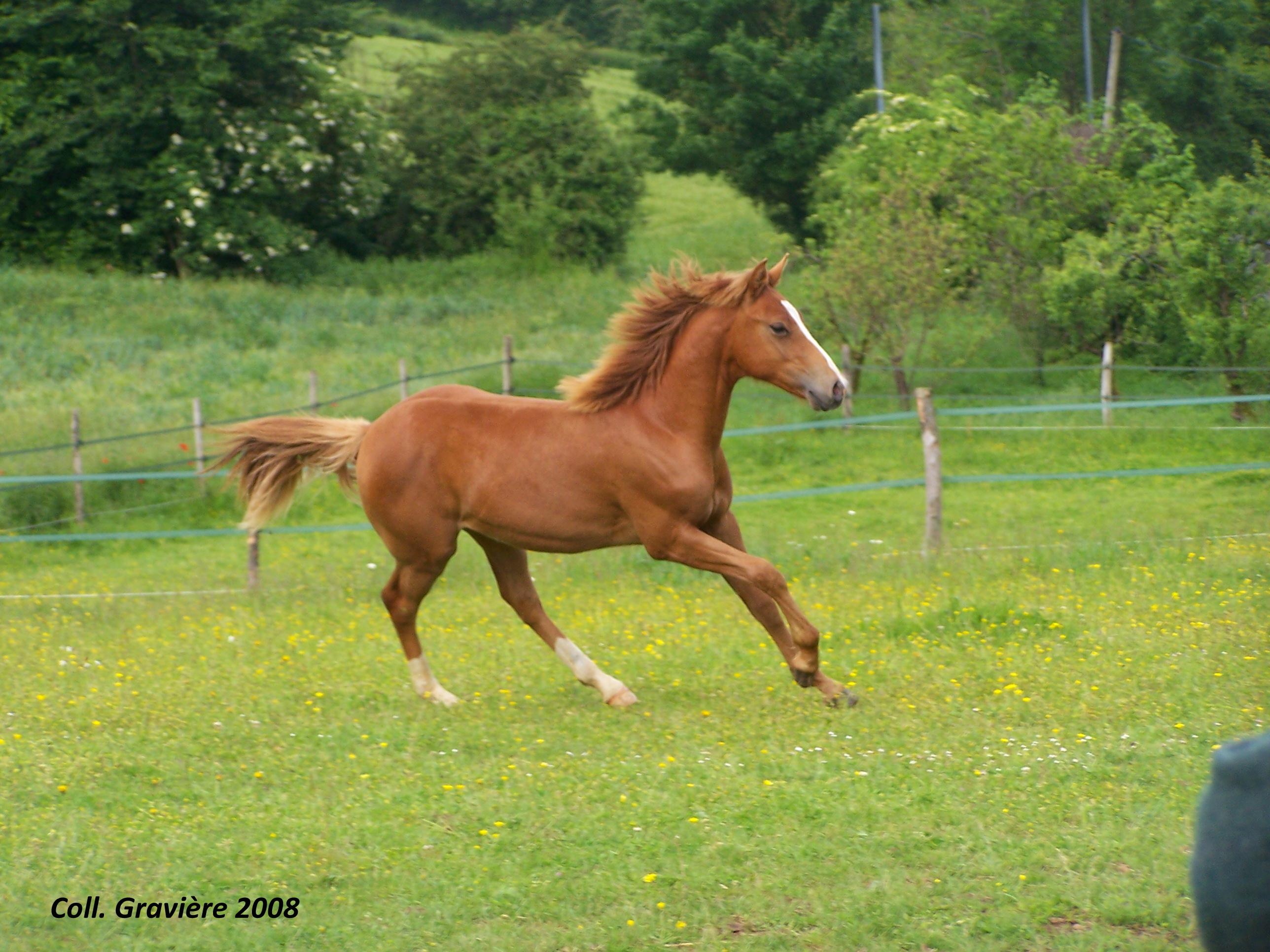 Formation Pratiques autour du cheval