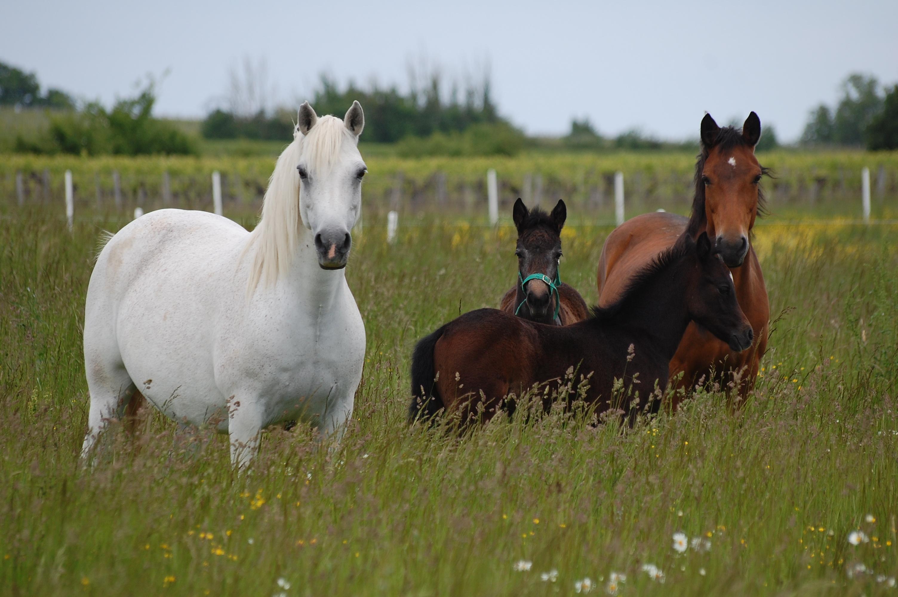 Formation Bien valoriser vos pâturages et vos chevaux
